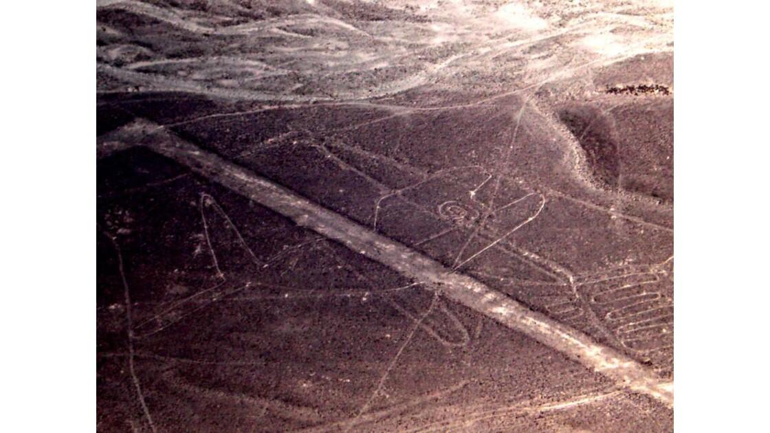 Baleine des Lignes de Nazca Pérou