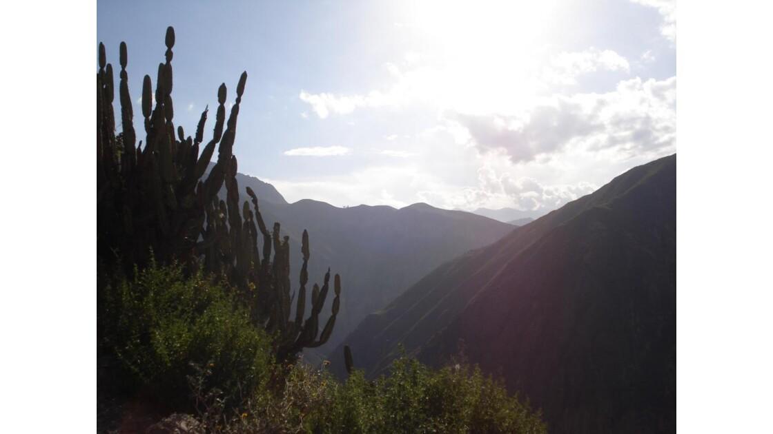 Cañon du Colca, Arequipa, Pérou