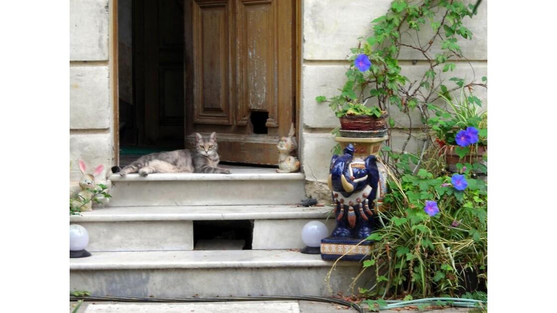 Chat urbain guette rat des villes