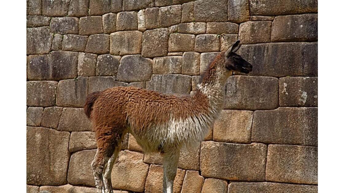 278 Machu Picchu