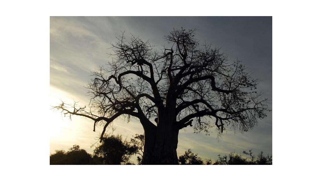 Botswana, Chobe ParK