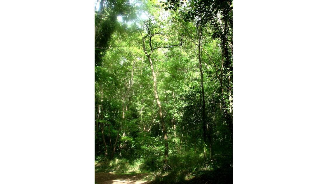 La forêt ... tout simplement