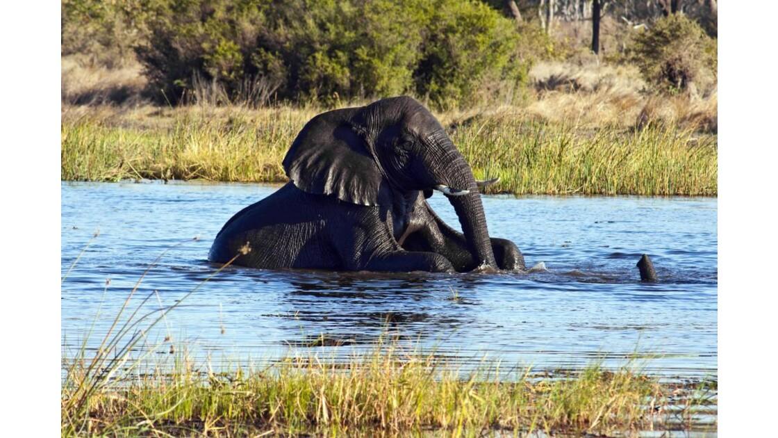éléphants au bain 1