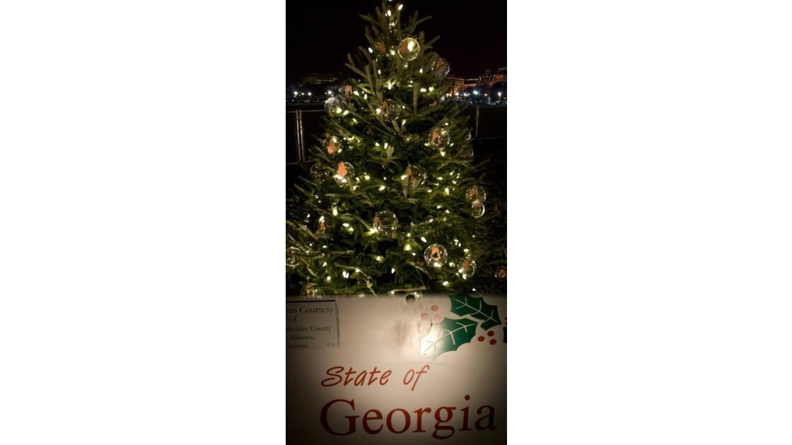 L_arbre_de_la_Georgie..jpg