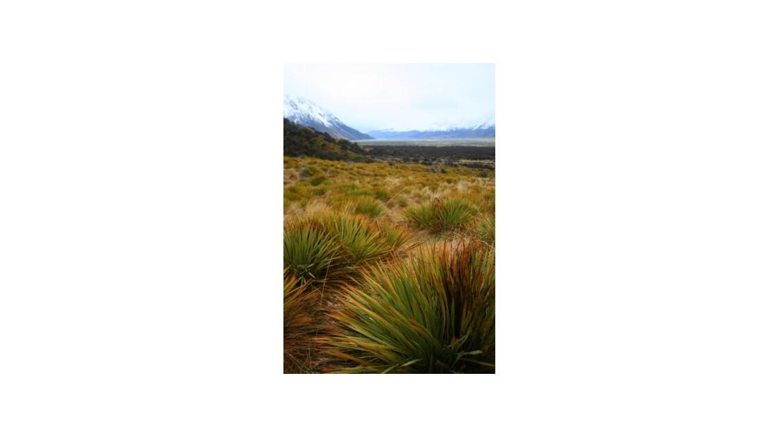 Végétation du Mont Cook