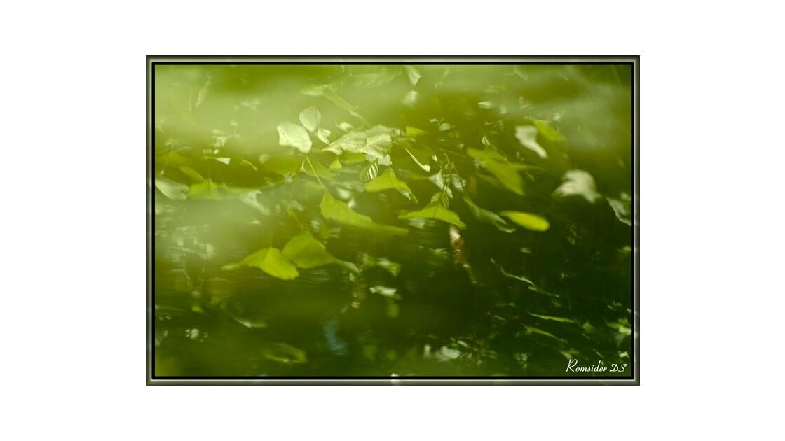 feuilles à fleur d'eau