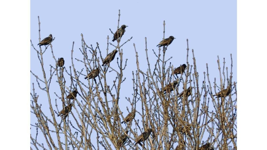 Plus d'oiseaux que de feuilles...