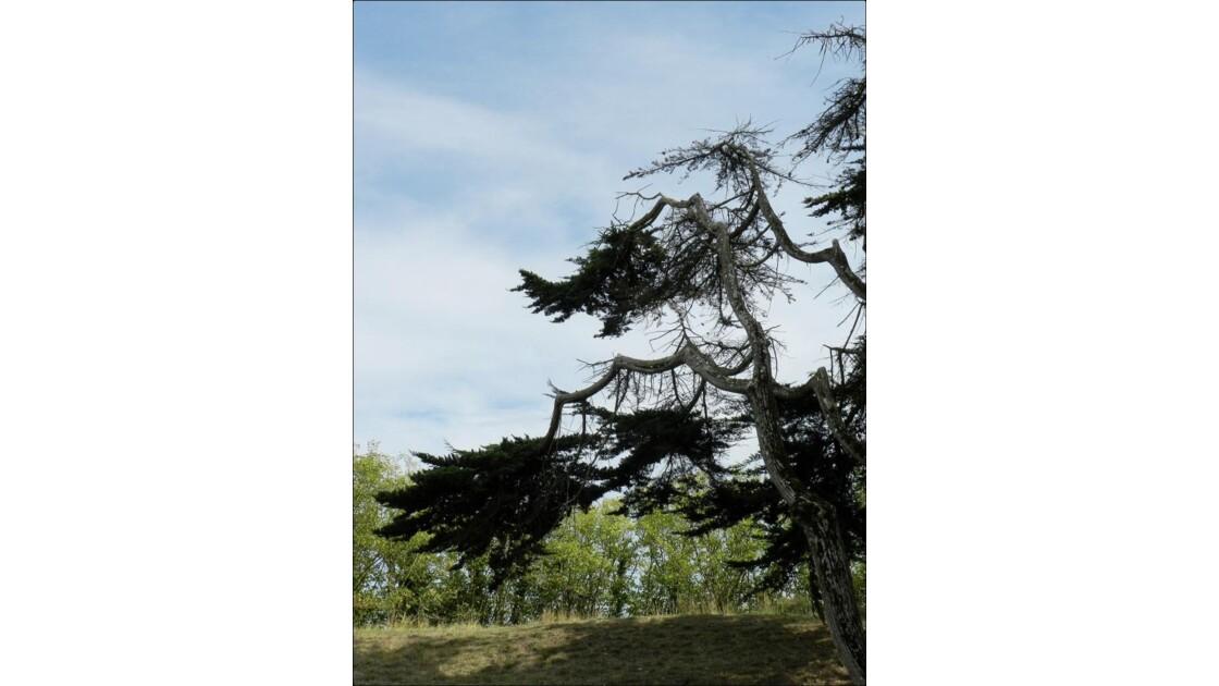 branches bizarroïdes