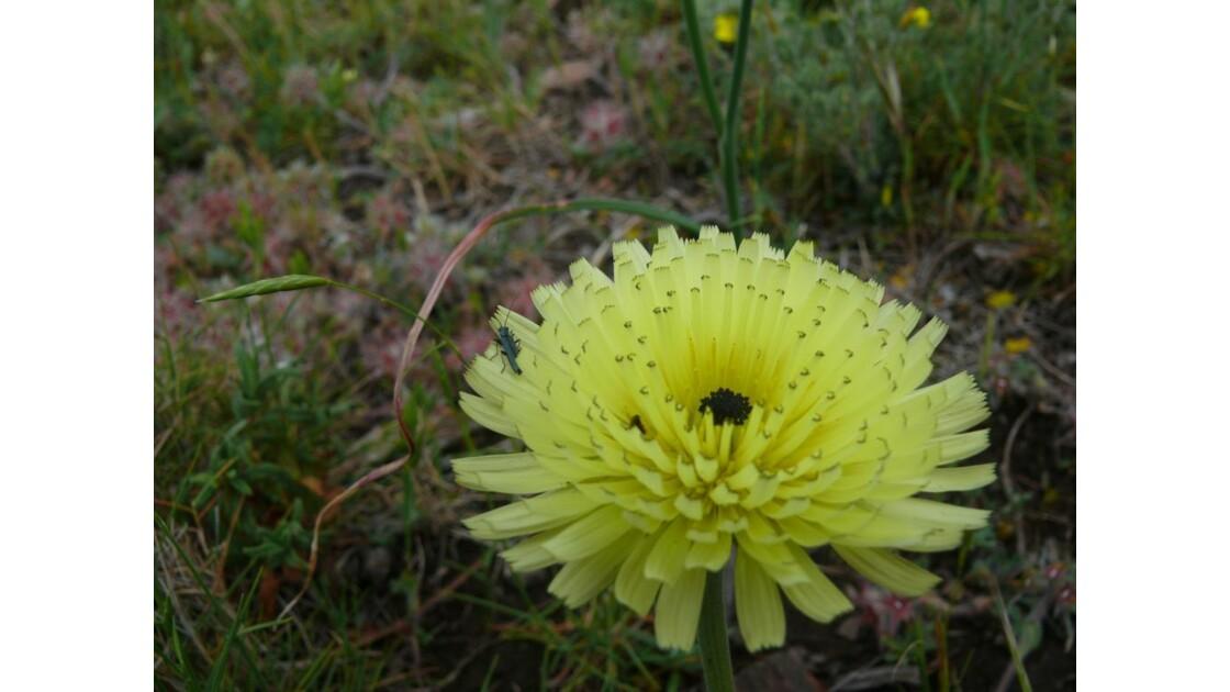 le soleil parmi les fleurs