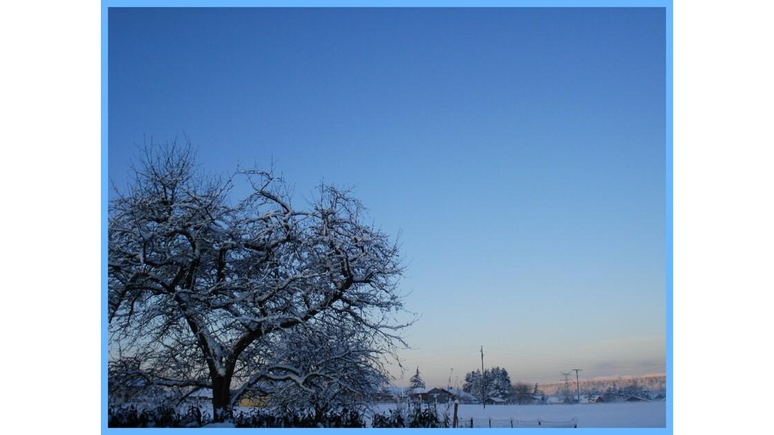 L'arbre et la neige...