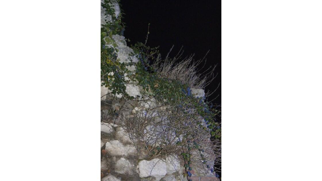 La pierre et la végétation