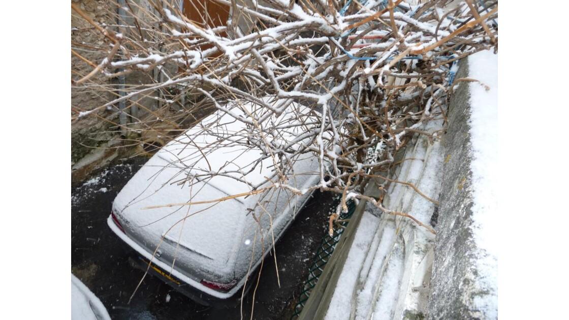 neige sur arbre et voiture