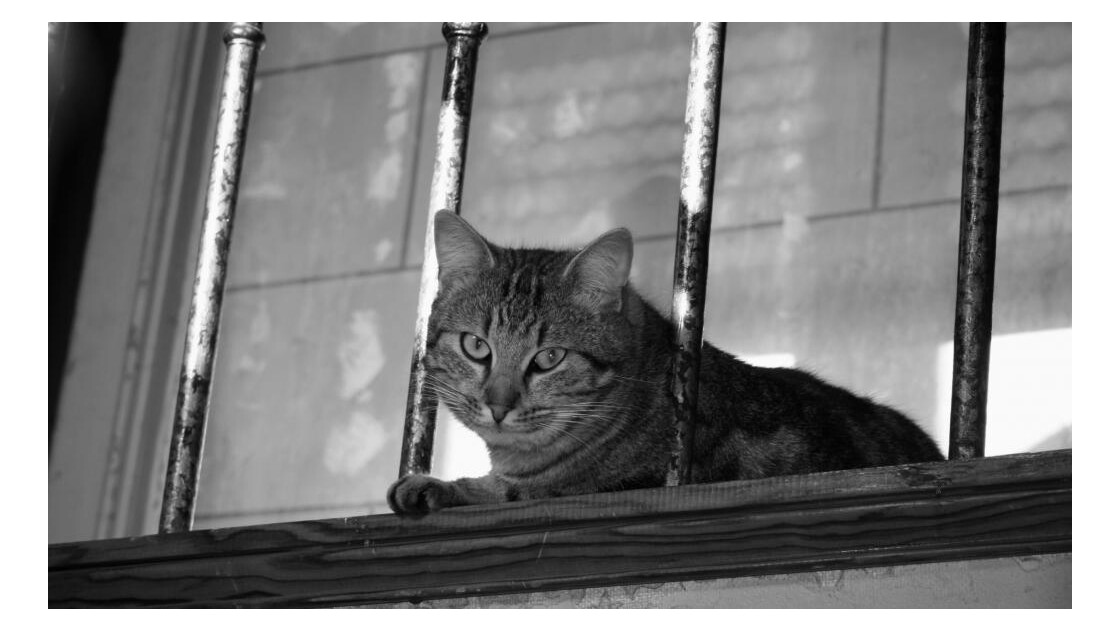 Le chat suite.....