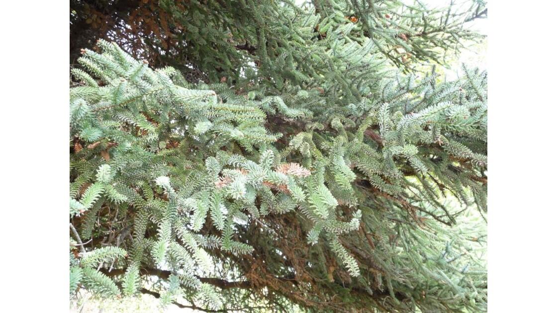 belles branches d'un arbre