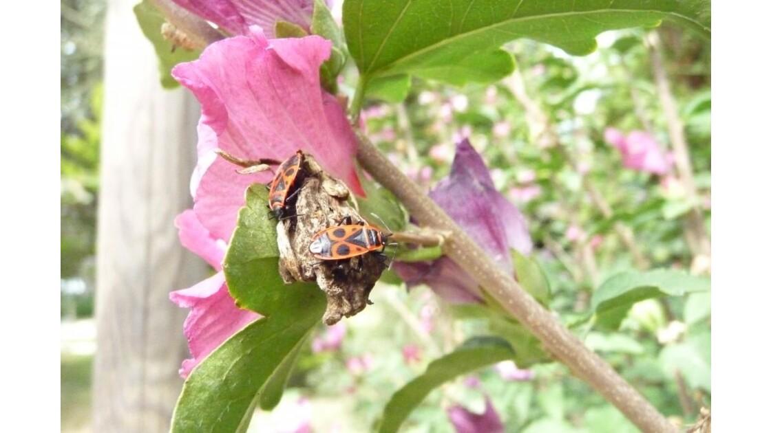 insectes sur une fleur