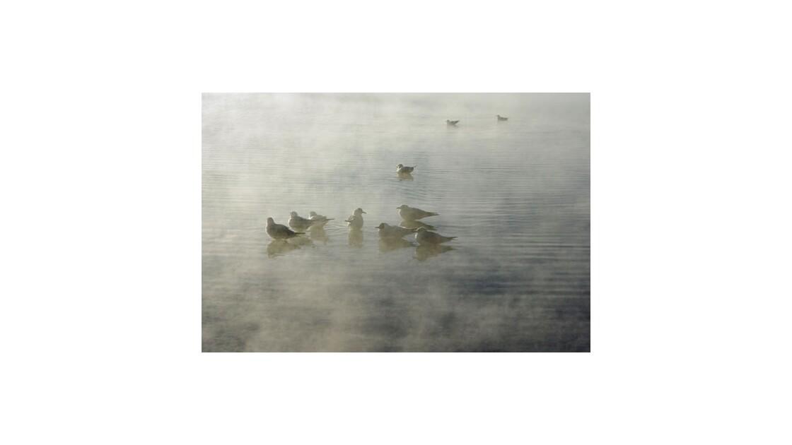 Oiseaux Laguna Challviri -Altitude 4500m