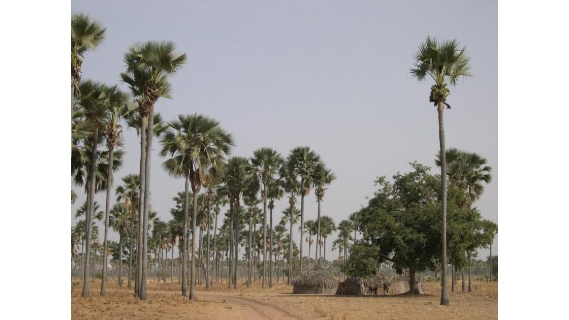 Village de brousse
