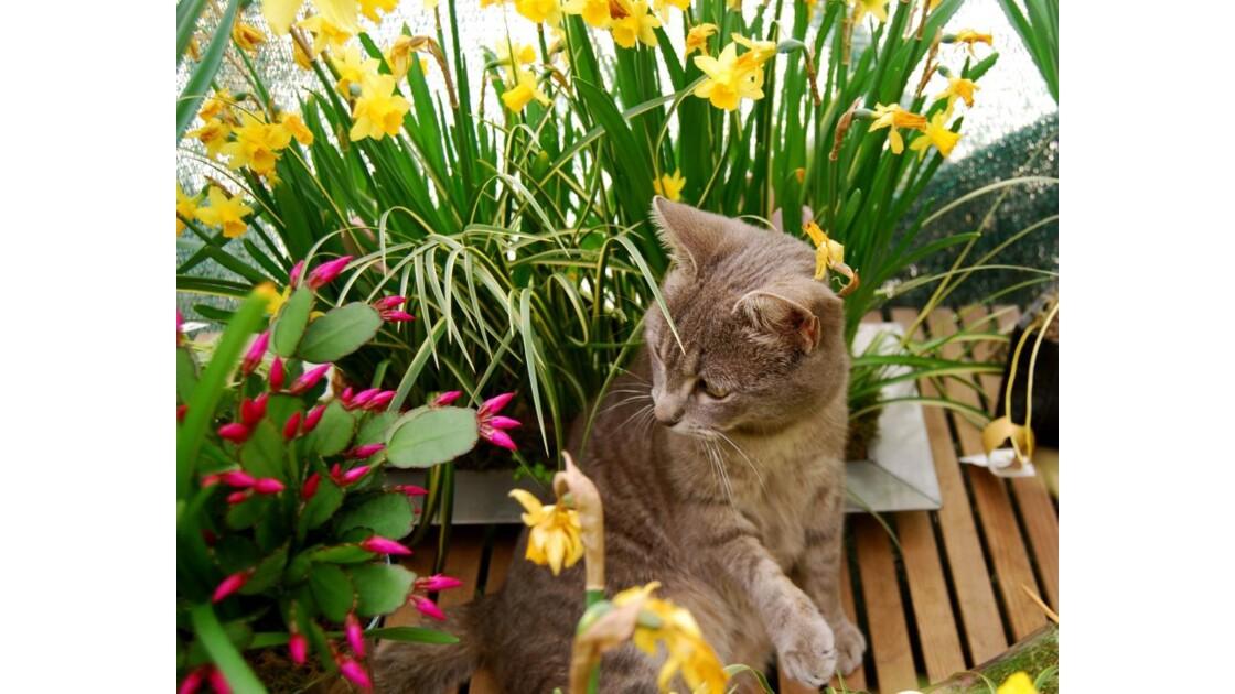 chat pépiniériste