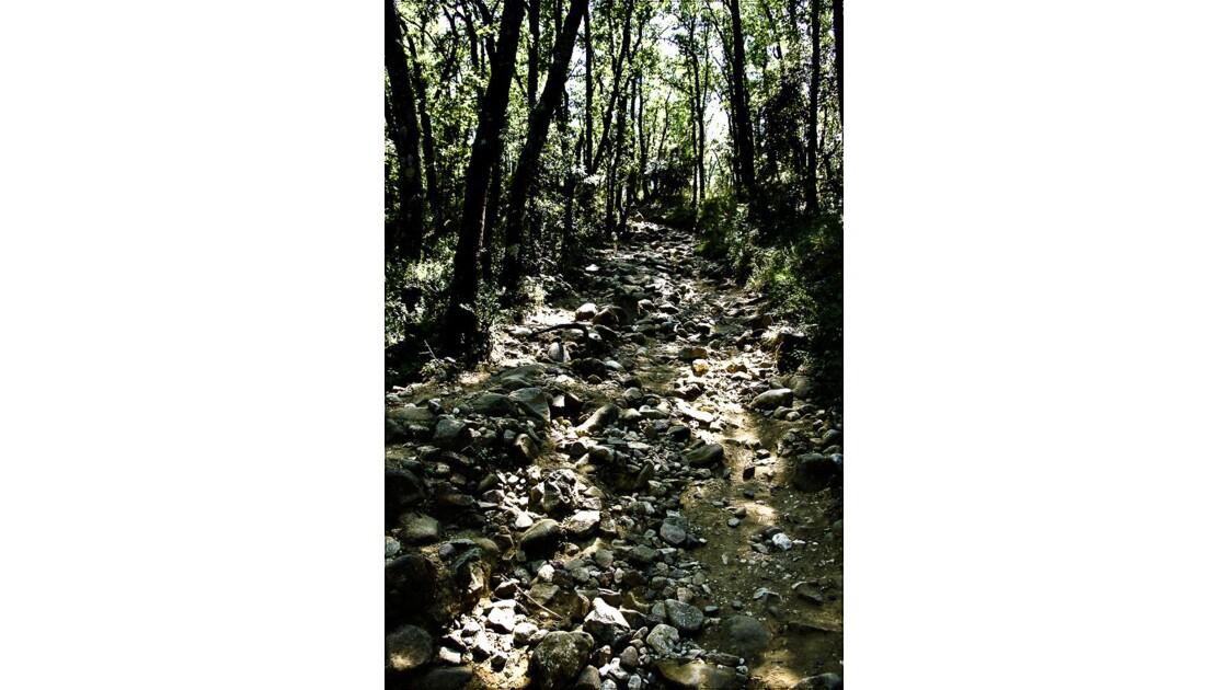 Chemin dans les bois !!