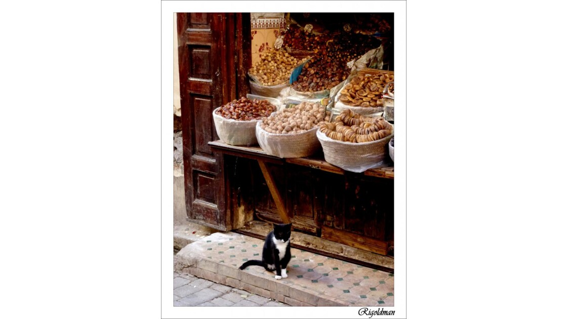 Le chat de Fès