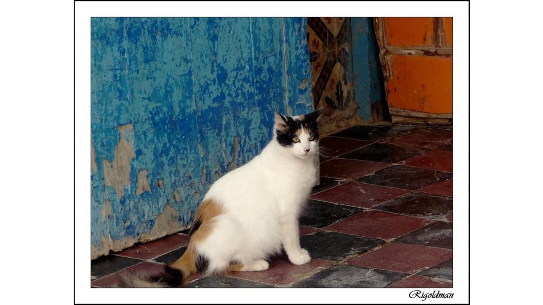 Le chat de Marrakech