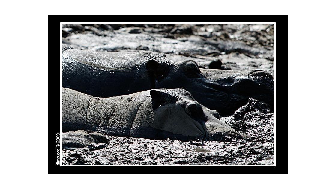Thalasso d'Hippos.jpg