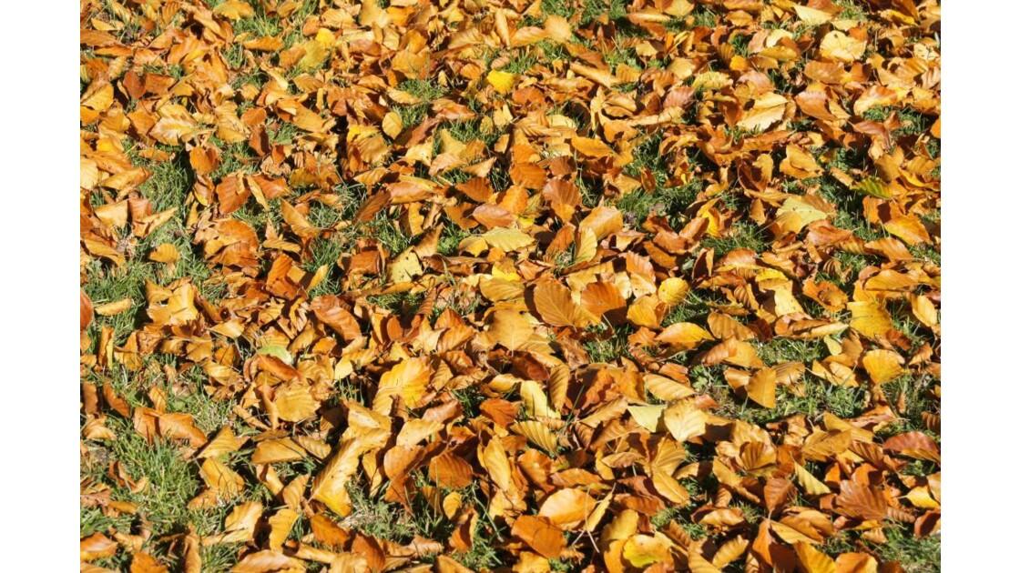 Parterre d'automne