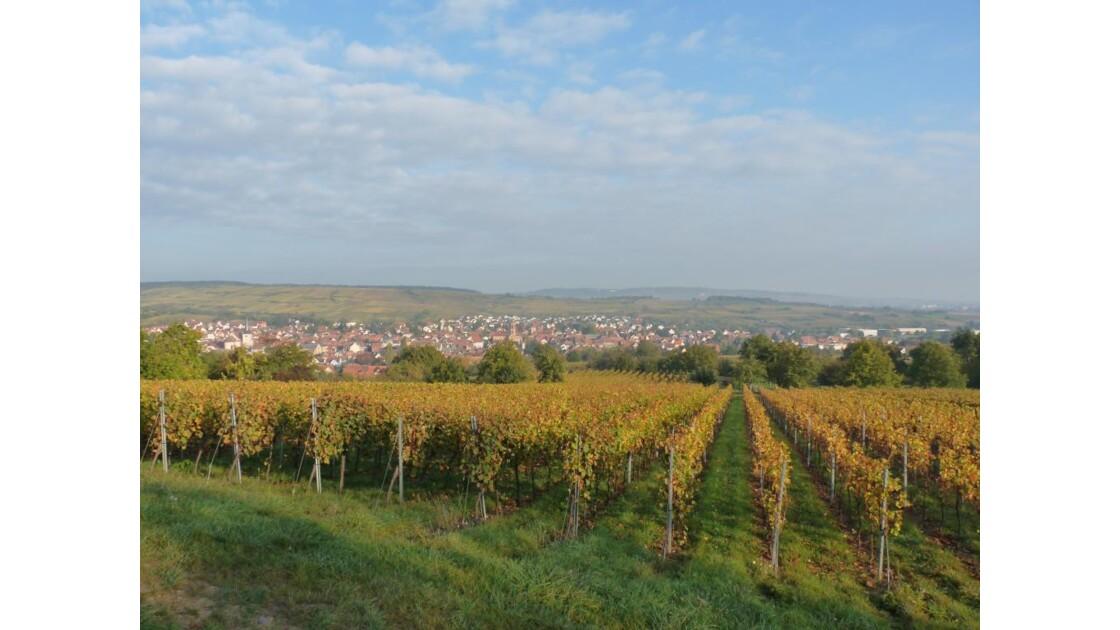 paysage route des vins