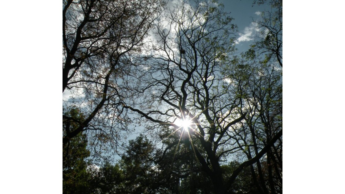 ce matin 11 h au soleil
