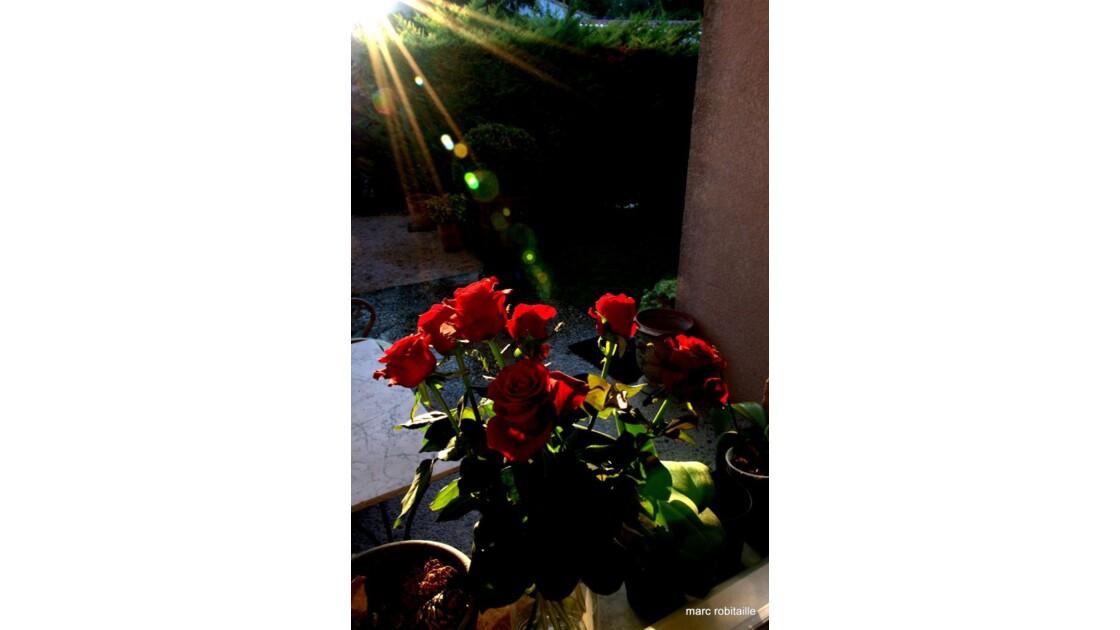Roses_rouges_sous_le_projecteur.jpg