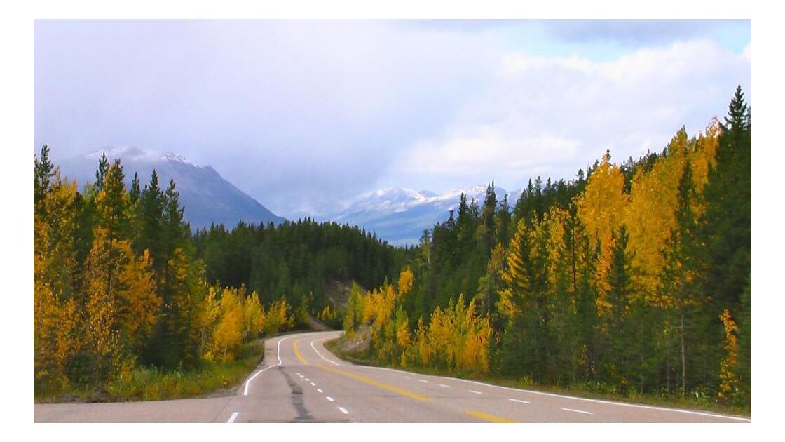 Sur la route des chutes d'Athabasca.JPG