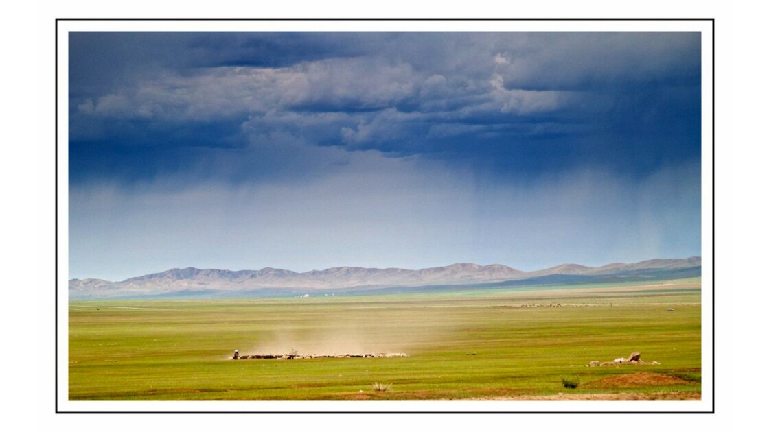 Troupeau Mongolie