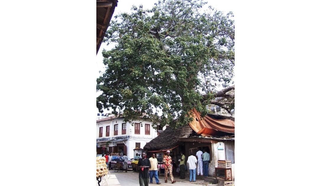 petits commerces au pied du baobab
