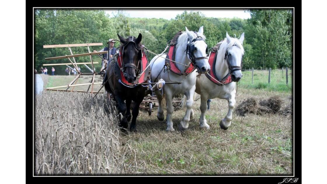 la_moisson_avec_chevaux.jpg