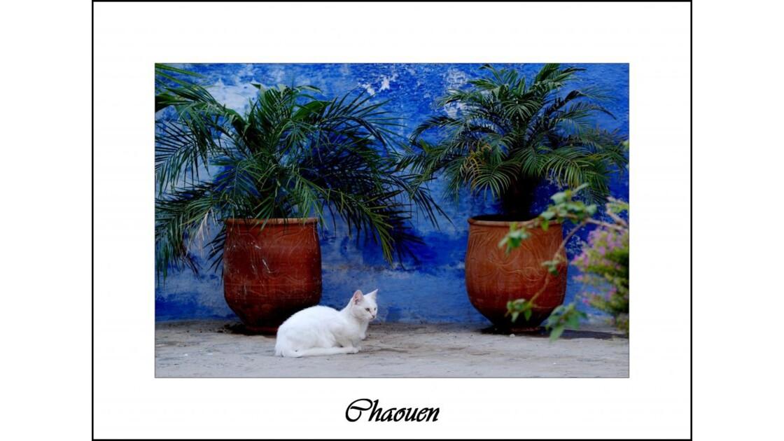 Le chat de Chaouen