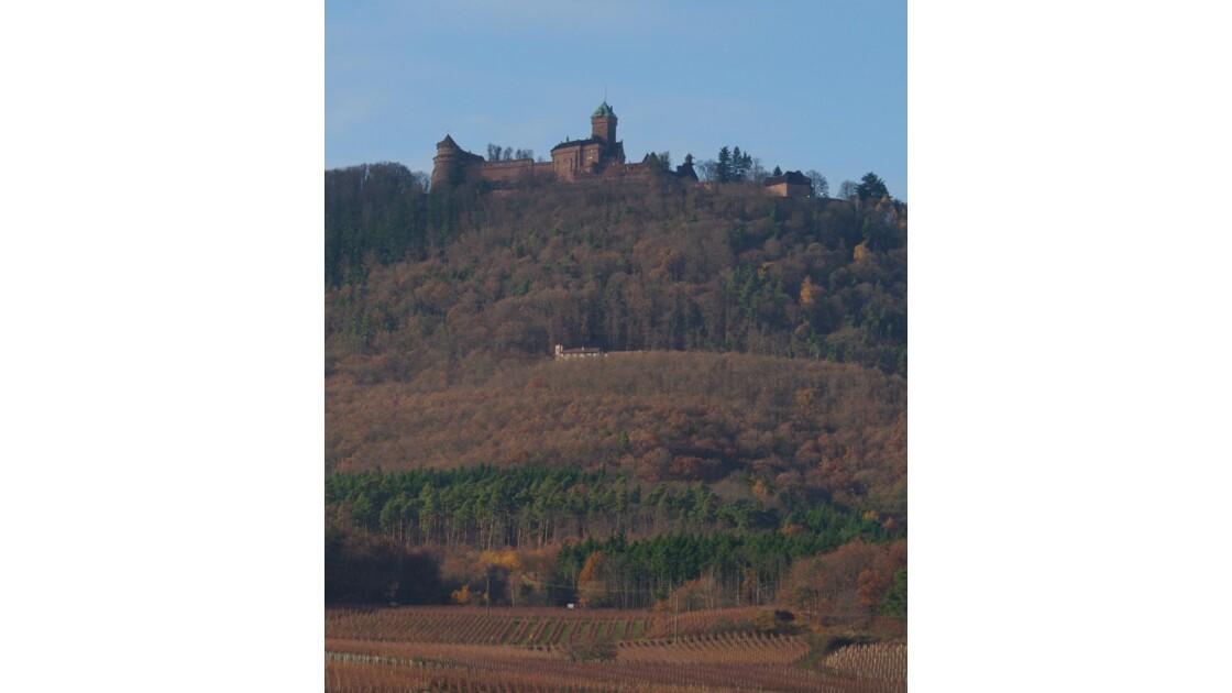 Haut_koenigsbourg et les vignes