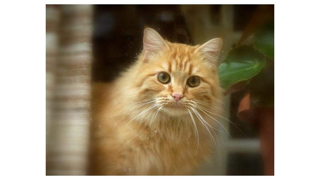 chat derrière sa vitre !