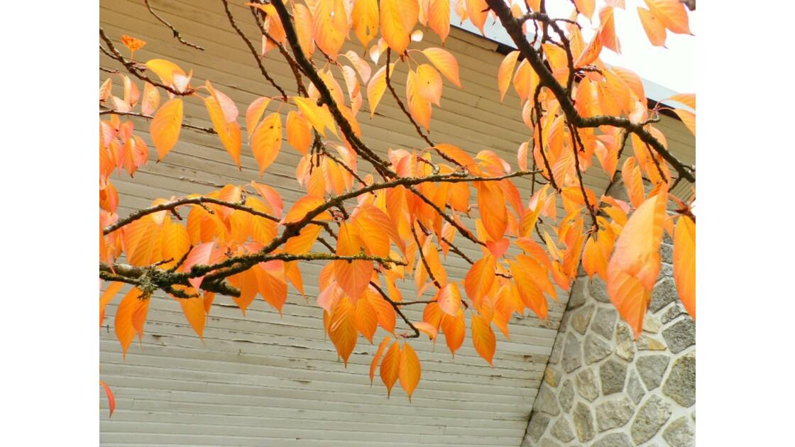 les couleurs du début de l'automne