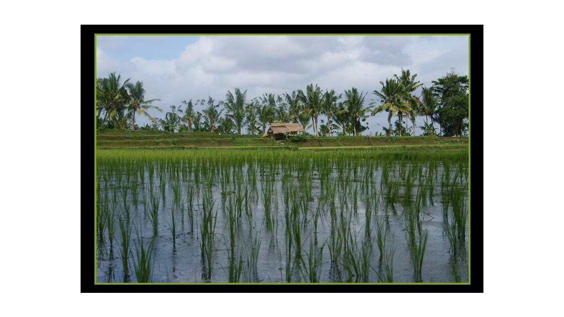 au ras des rizières