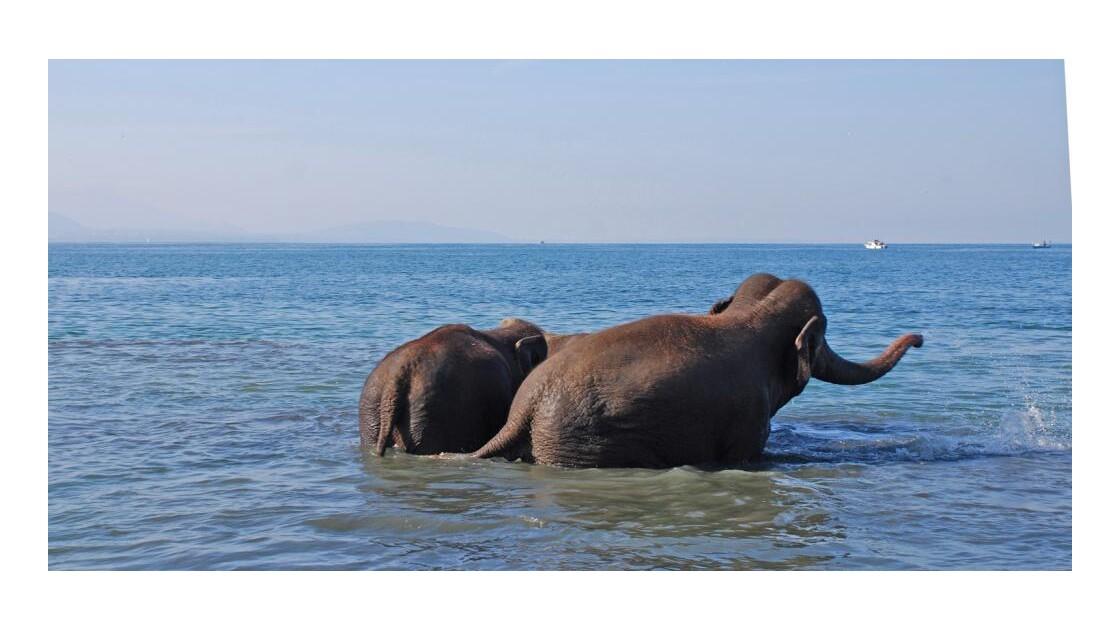 le bain des éléphants 8