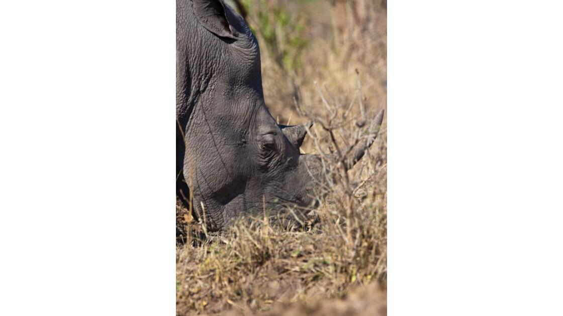 Rhino broutant