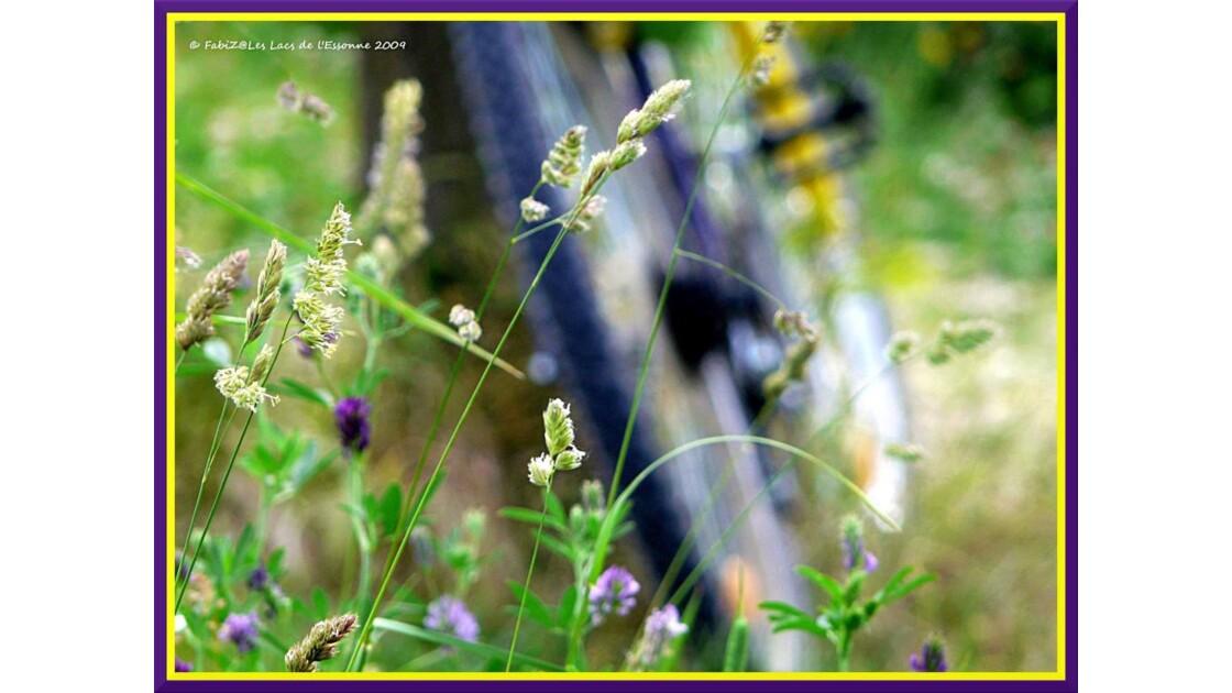 Balade Champêtre à Vélo