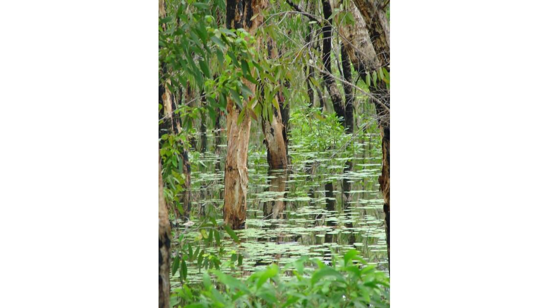 Australie_inondation