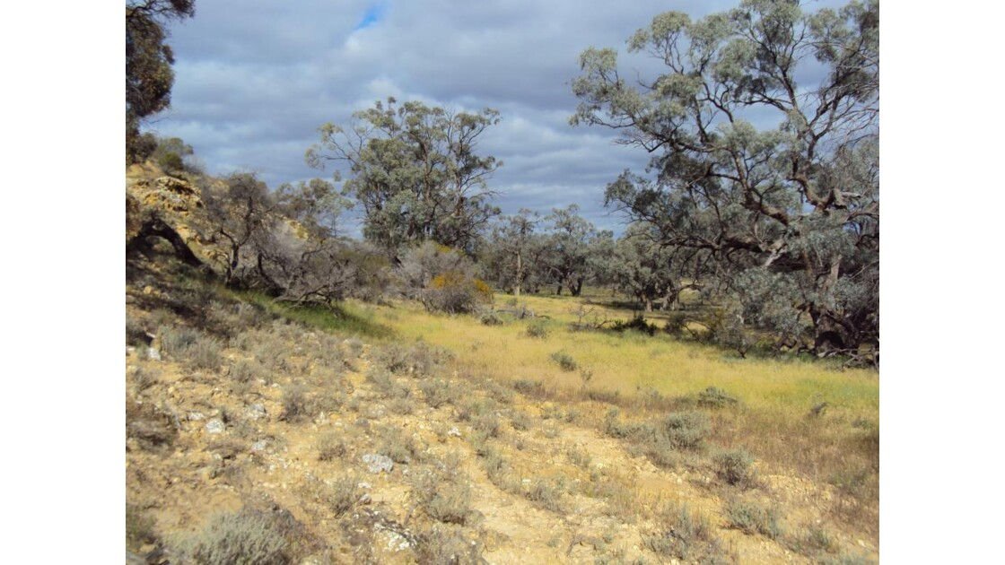 Le bush australien