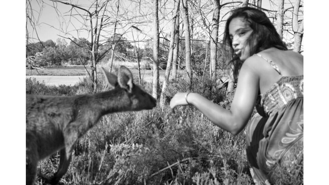 Parmi les kangourous