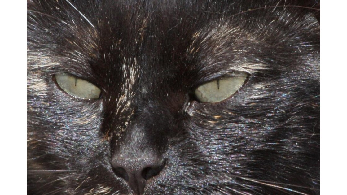 Le yeux du chat