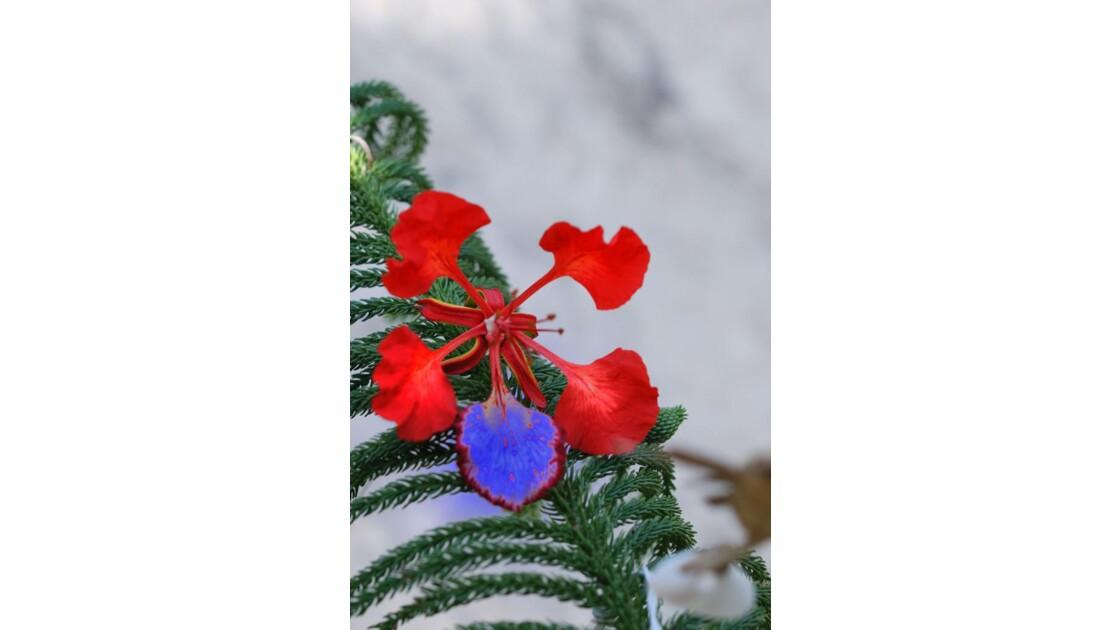 Fleur bariolée