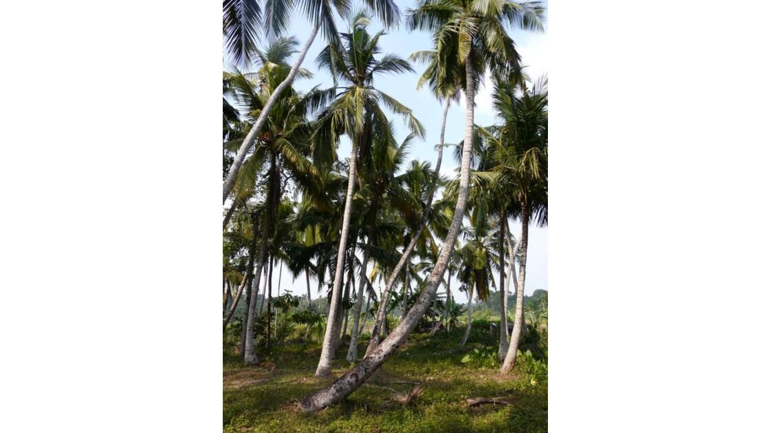 Palmiers !!