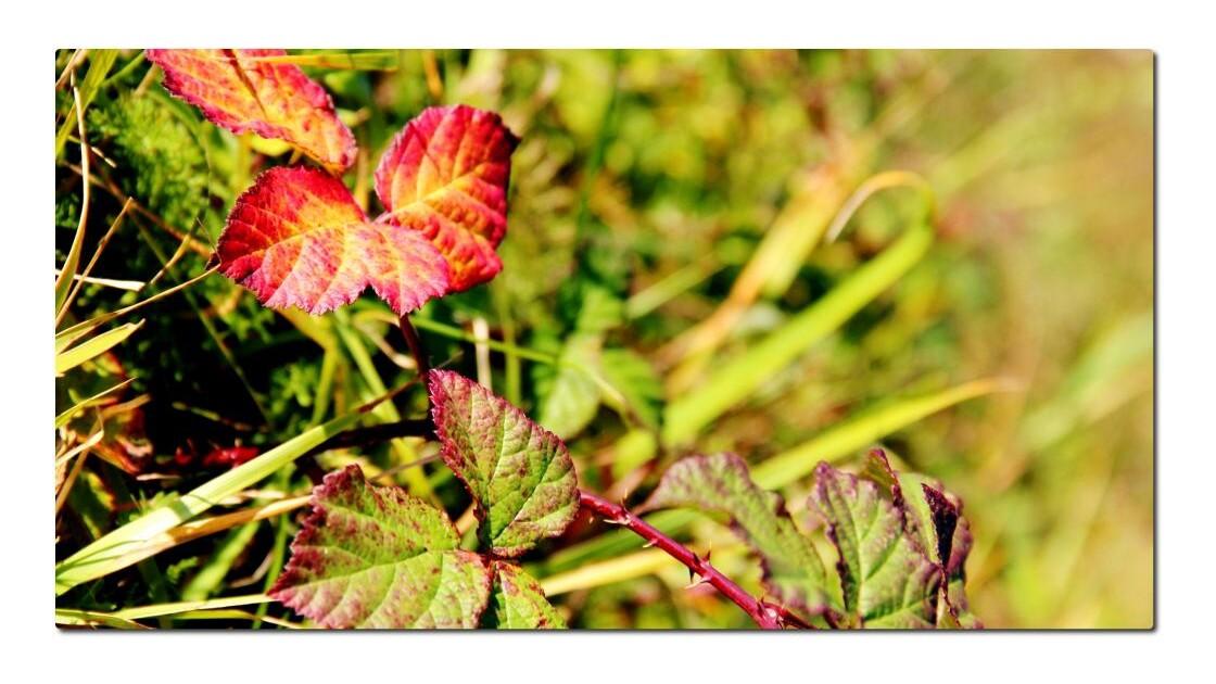 couleurs en automne
