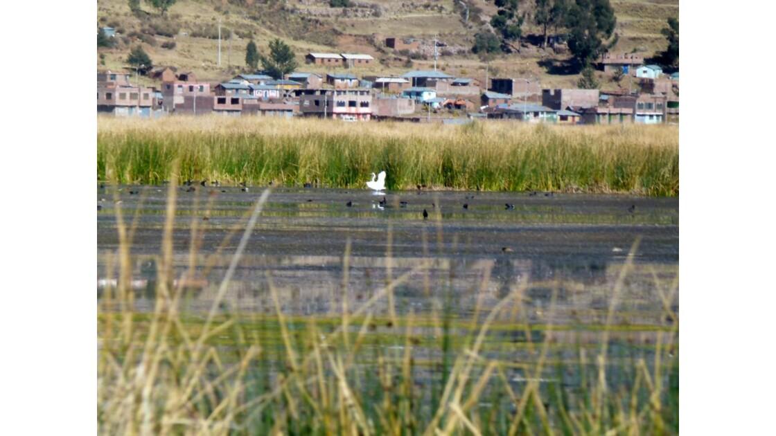 Quartie de Puno depuis le lac